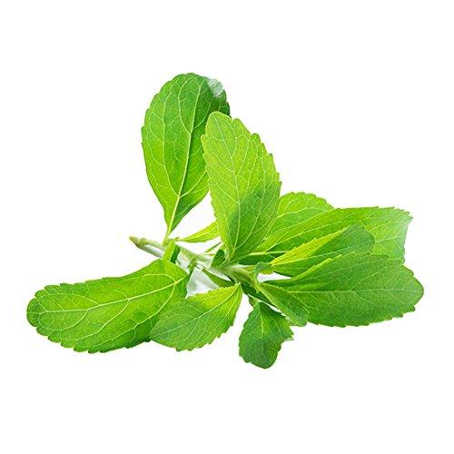 good01 Dekorative Stevia Pflanzen   Natürliche Süßere Rebaudiana-Samen Für Garten-Balkon-Yard Zu Hause Pflanzen 400PCS Stevia Seeds