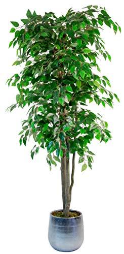 Maia Shop Ficus Artificial con Troncos Naturales, 180 cm, Materiales Mixtos