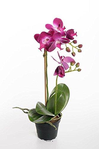 Artificielles - Orchidee 2 hampes en Pot h 40 cm Toucher Reel Erica - Couleur: Erica