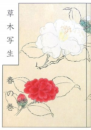 A Japanese Botanist's 17th Century - Sketchbook: Spring Flowers