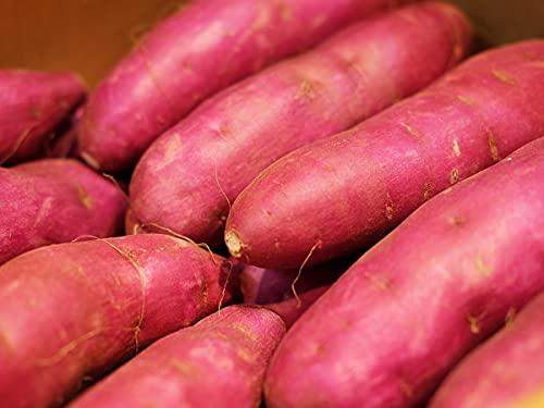 千葉県産 紫芋 パープルスイートロード 秀品 Mサイズ(約20本入)約5kg