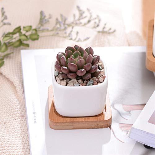 YGDH Bandeja De Bambú Pot Geométrico De La Flor De La Casilla Blanca De Cerámica Bonsai Tiesto Pequeño Suculento De Tiesto Moderno Pequeño Cactus (Color : Excluding Plants)