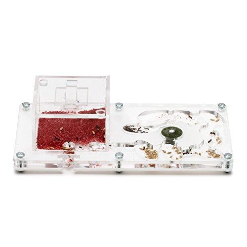 Kit Ant Farm - Ameisenfarm 20x10x1 (Kostenfreie Ameisen mit Königin)