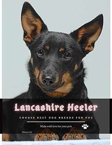 Lancashire Heeler: Choose best dog breeds for you (English Edition)