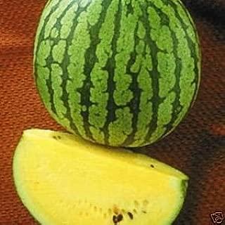 Watermelon Yellow Doll - Hybrid Great Garden Vegetable 10 Seeds