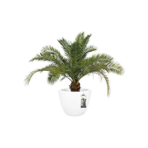 "Elho 8874575915000 Pure Soft Round Wheels Flowerpot, 60cm/23.62"", White"
