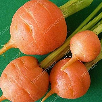 VISTARIC 2: 100 pcs/sac graines fraîches géant oignon rouge et violet Graines de légumes 95% d'origine végétale à haute germination pour le jardin à domicile Livraison gratuite 2