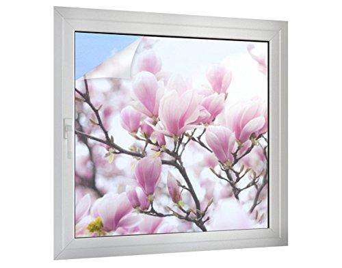 Klebefieber Sichtschutz Blüten am Magnolienbaum B x H: 100cm x 100cm