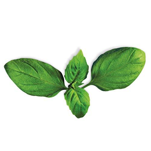 Capsules De Graines pour herbes plantui 6 Smart Garden, basilic