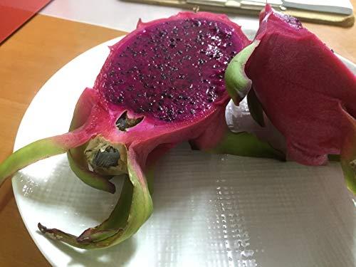 沖縄県産フルーツ ドラゴンフルーツ赤4kg(8玉〜16玉)