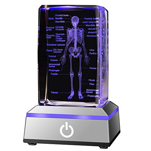 IFOLAINA Human Skeleton Model Body 3D Laser Crystal Skeleton System Each Bone with Name on a Colorful LED Light Base for Study Guide