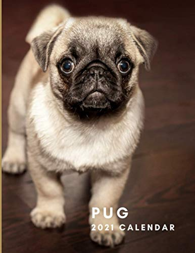 Pug 2021 Calendar: Pug 2021 Wall Calendar | January to December | One Year Photo Calendar Schedule Organizer Planner for 12 Months | With Notes and To ... Present for Colleague Coworker Manager Friend