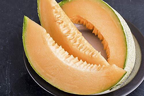 Qualité Doux Jardin de légumes 20 Canary MELON HONEYDEW jaune melon Semences
