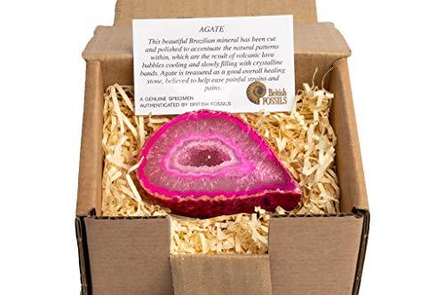Geoda de ágata brasileña en caja de regalo de British Fossils, color rosa