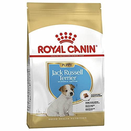 ROYAL CANIN Jack Russell Terrier Junior - 1500 gr ✅