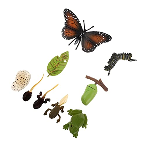TOYMYTOY 2 Juegos de Insectos Juguetes de Ciclo de Vida Ranas Modelo de Crecimiento Figuras de Mariposa Juguete de Aprendizaje Etapa de Crecimiento Modelo de Ciclo de Vida Realista para