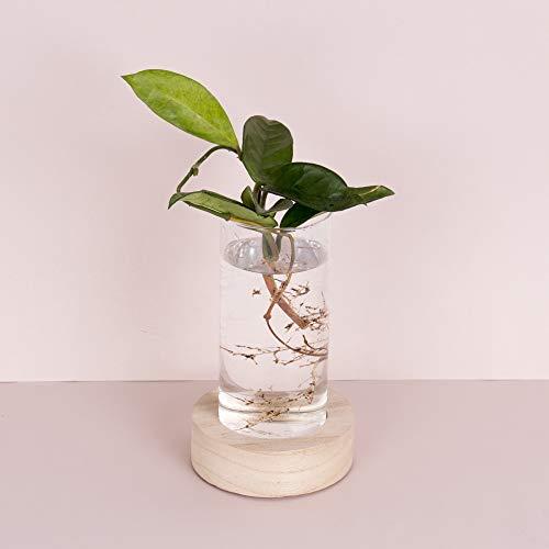Helio Ferretti. Base con Jarrón de Cristal Decorativo y Moderno con luz para el hogar. Jarrón transparente para plantas y flores hidropónicas.