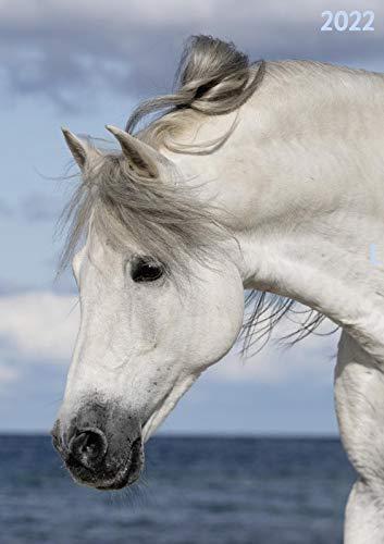 Terminplaner Pferd 2022: Praktischer Taschenkalender mit viel Platz zum Eintragen und tollen Fotos - für alle Pferdeliebhaber