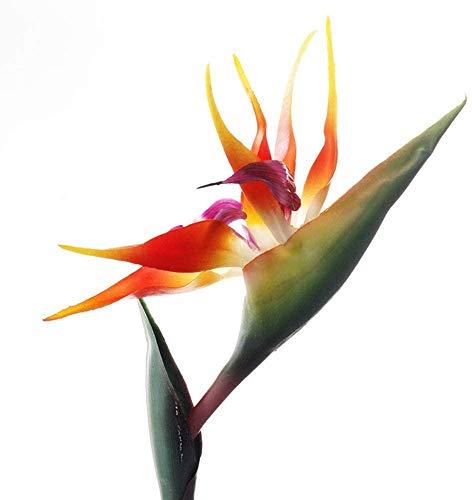 Flor permanente de pájaro del paraíso de 81,28 cm, flor artificial grande y elegante pájaro del paraíso, tallo de 1,27 cm, plantas artificiales para la oficina en el hogar, 2 unidades (rojo naranja)