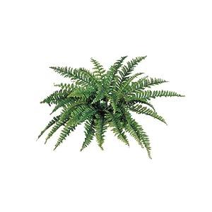 "Larksilk Boston Fern Artificial Plants Fake Silk Indoor or Outdoor Plant, Hanging Basket or Planter, 34"" Inch Diameter Set of (6) 42 Fronds Each"