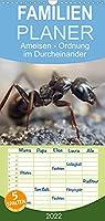 Ameisen - Ordnung im Durcheinander - Familienplaner hoch (Wandkalender 2022 , 21 cm x 45 cm, hoch): Eindrucksvolle Bilder der Hautfluegler, die in perfekt organisierten Staaten leben. (Monatskalender, 14 Seiten )