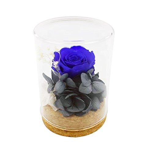 Tumao Konservierte Rose Blau, Die Ewige Rosa Rose Perfekt als Geschenk für die Hochzeit, Geburtstag, Festival, Weihnachten, Jubiläum, Valentinstag - ECHTE Rosen