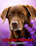 Labrador Retriever Coloring Book: Interesting coloring book suitable for all ages, helping to reduce stress after studying, working tiring.– 30+ GIANT Great Pages with Premium Quality Images