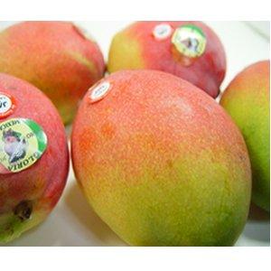 遅れてごめんね!父の日ギフト メキシコ産 アップルマンゴー 3個 (1個330g〜350g)+黄色い薔薇6月23日〜6月27日の間のいずれかの日お届け】