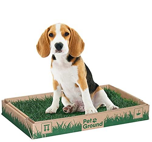 PetGround, césped Natural para Mascotas: 1ª Alternativa Natural y ecológica, a los empapadores para Perros