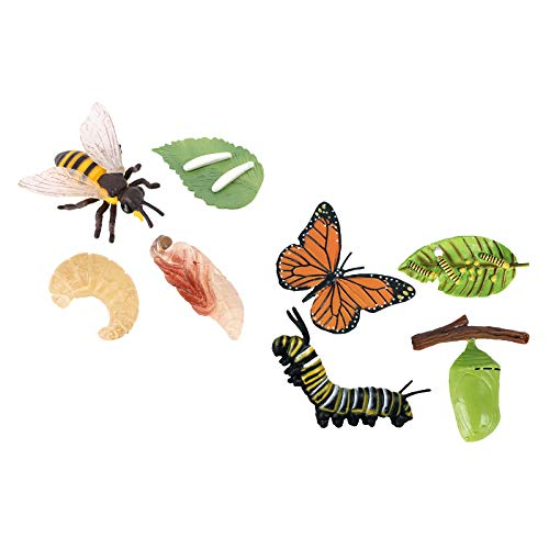 F Fityle Butterfly Bee Growth Life Cycle Playset Giocattoli Cognitivi Prescolari per Bambini
