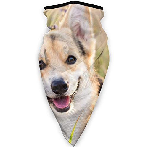 shenguang Happy Corgi Dog Mascarilla a Prueba de Viento Mascarilla Deportiva Bufanda Pasamontañas Exterior Cubierta Facial