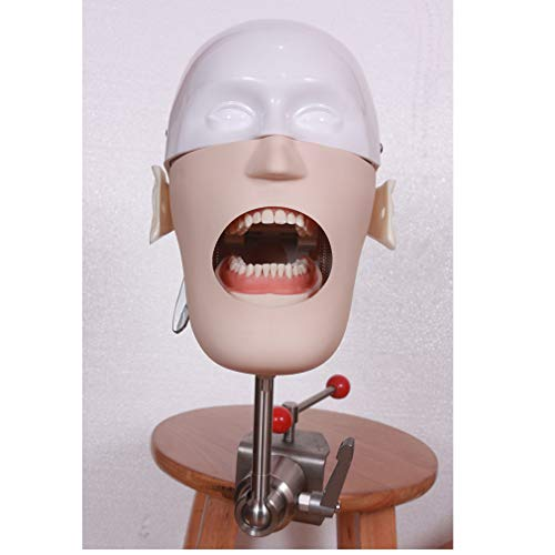 LMEIL Dentalsimulator Phantomkopf-Training, Modellpuppen-Phantom in Lebensgröße mit Zähnen Modell-Training für Zahnärzte und Zahnarzthelfer sowie Hygieniker