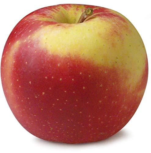 Obst & Gemüse Bio Apfel Elstar (1 x 1000 gr)
