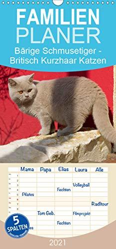 Bärige Schmusetiger - Britisch Kurzhaar Katzen - Familienplaner hoch (Wandkalender 2021, 21 cm x 45 cm, hoch)