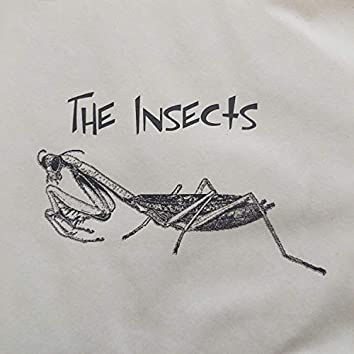 The Insects Cake Mix