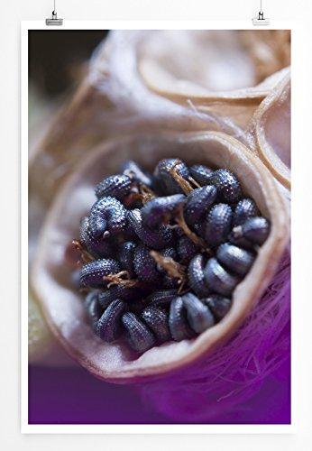 Eau Zone Home foto - natuurlijke afbeeldingen - kleine zaden - fotodruk in haarscherpe kwaliteit POSTER 90x60cm