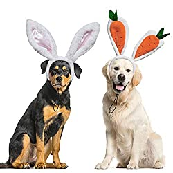 Easter Outfits For Dogs - Rottweiler wearing bunny ears headband, and Golden Retriever wearing carrot ears headband.