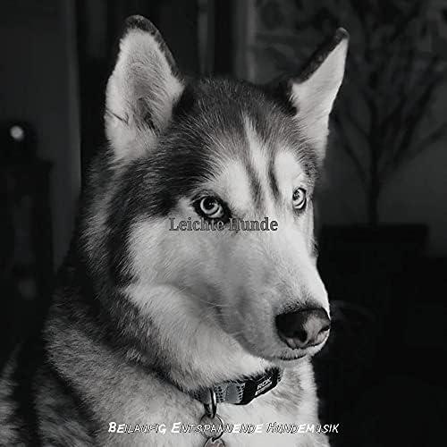 Beilaufig Entspannende Hundemusik