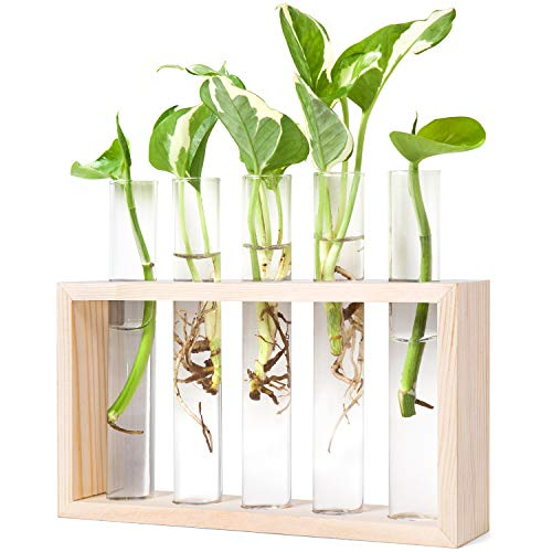 Mkono Wall Hanging Glass Planter Plant Terrarium Modern Flower Bud Vase in Wood Stand Rack Tabletop Terrarium for Propagating Hydropoinc Plants, Home Office Decoration with 5 Test Tube, Medium, Beige