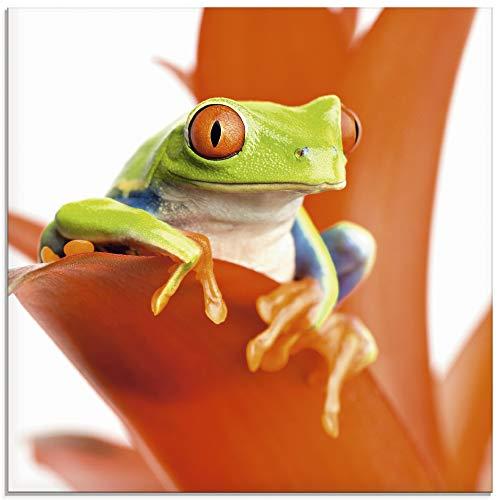 Artland Glasbilder Wandbild Glas Bild einteilig 30x30 cm Quadratisch Natur Tiere Frosch Laubfrosch Gesicht Pflanze Blumen Orange T5XA