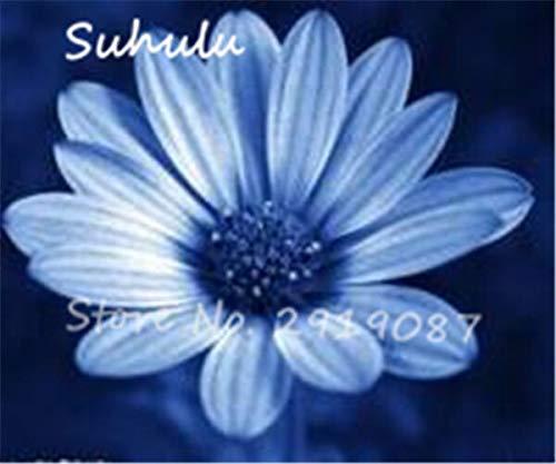 20: Schöne Gänseblümchen Blumensamen 30 Partikel Eiscreme Parfüm Chrysantheme Tha Souk Tanz Bonsai Blumensamen