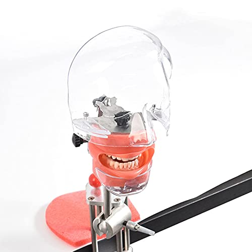 Dental Lesing Head Model, Fix Phantom Head Models op de tafel, Ord Caven Tandarts Tand Lesmodel voor Patiënt Annuleren voor artsen