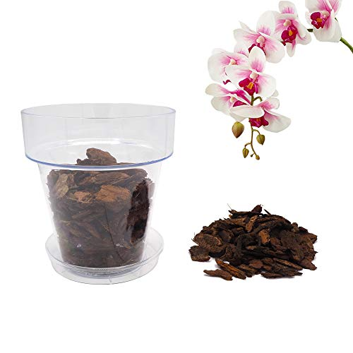 bloome Kit de trasplante de orquídeas: Maceta Transparente con Agujeros de Drenaje, platillo y Suelo específico para orquídeas (14_cm)