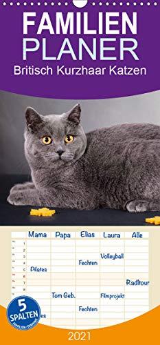 Britisch Kurzhaar Katzen - Familienplaner hoch (Wandkalender 2021, 21 cm x 45 cm, hoch)