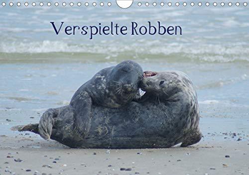 Verspielte Robben (Wandkalender 2021 DIN A4 quer)