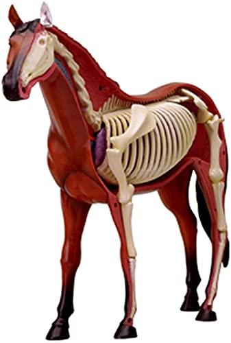 DZCGTP Kits de Modelos anatómicos, visión 4D, Modelo de anatomía de Caballo, ensamblaje de Rompecabezas, Juguete, biología Animal, Esqueleto, anatomía de órganos, enseñanza médica