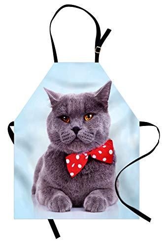 ABAKUHAUS Gato Delantal de Cocina, Tema Scottish Fold Gris, Los Colores No Destiñen Ajustable Estampa Digital, Multicolor
