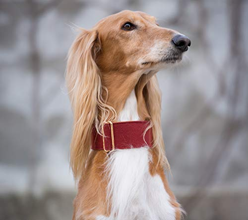 Collare per cani in tessuto rosso vino con frustino, levriero italiano Lurcher Sighthound largo (medio)