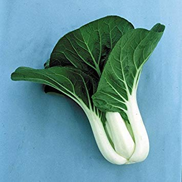 SANHOC Samen-Paket: Kings Seeds - Seeds - Pak Choi Joi Choi F1-125 SeedsSEED