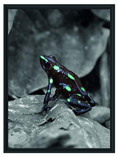 Picati Baumsteiger Frosch im Schattenfugen Bilderrahmen/Format: 80x60 / Kunstdruck auf hochwertigem Galeriekarton/hochwertige Leinwandbild Alternative